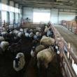 Новая ферма по производству молока появится в Лысковском районе